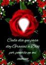 Cc rosas rojas+texto