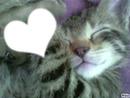 Mignon petit chaton !