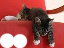 2 petits chats