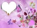 mariposas fondo rosa