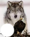 loup et aigle