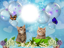 Cadre chatons