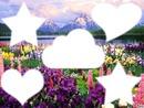 paysage de fleur