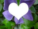 L'amour dans une fleure <3