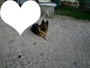chienne amour
