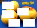 cadre pommes automne 2014 5 photos