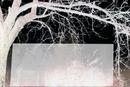 Un arbre dans la nuit -1 photo