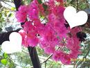Pergola fleurie
