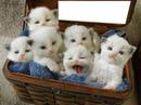 6 chatons dans un panier 1 photo cadre