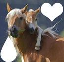 coeur de cheval