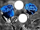 2 roses bleues