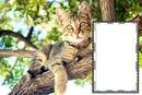 Cc Bello gatito