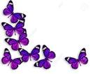 nuit de papillon