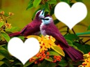 Oiseau des iles*