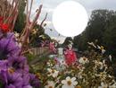 le canal sous les fleurs