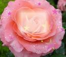 Flor Bella
