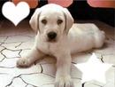 Ce chiot adorable