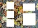 cadre automne  pour 5 photos