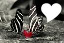 *Le charme du noir et blanc*