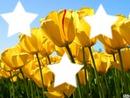 Cadre étoiles/Fleur