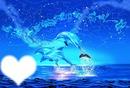 dauphin magnifique