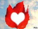 coeur de feuille