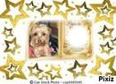 petit chien et étoiles