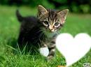 si vous aimez quelqun  qui aime les chat  mettez une photo de lui  ( ou elle ) dans le coeur !