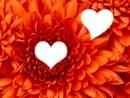2 photos fleur