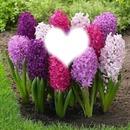 illatos virágok