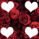 rose + 4 coeurs