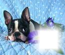 cadre chien