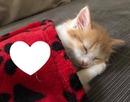 gato 1 foto
