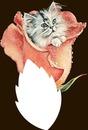 chat dans une rose