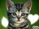 le petit chat qui vous aime