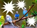 oiseaux des iles