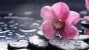 Fleur Rose