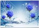 rose bleux
