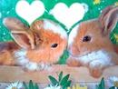 lapins de paques
