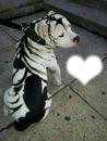 i love the dog