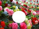 mon jardin 03