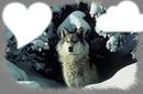 loup des neige