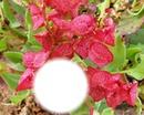 rosa Wunder