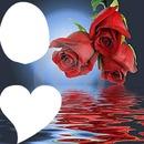 rosa 2 fotos