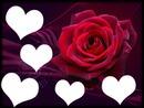rose (5 coeurs)