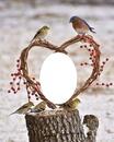 jean oiseaux