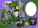 ***petites fleurs bleue***