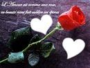 rose et poème