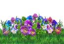 Beautiful flower #17