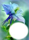 Fleur bleu-mauve